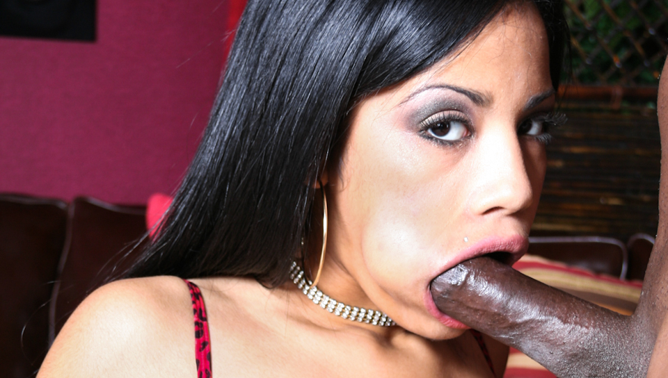 Watch Spermbanks Vol 06 (Doghouse Digital) XXX Porn Tube Videos Gifs And Free HD Sex Movies Photos Online